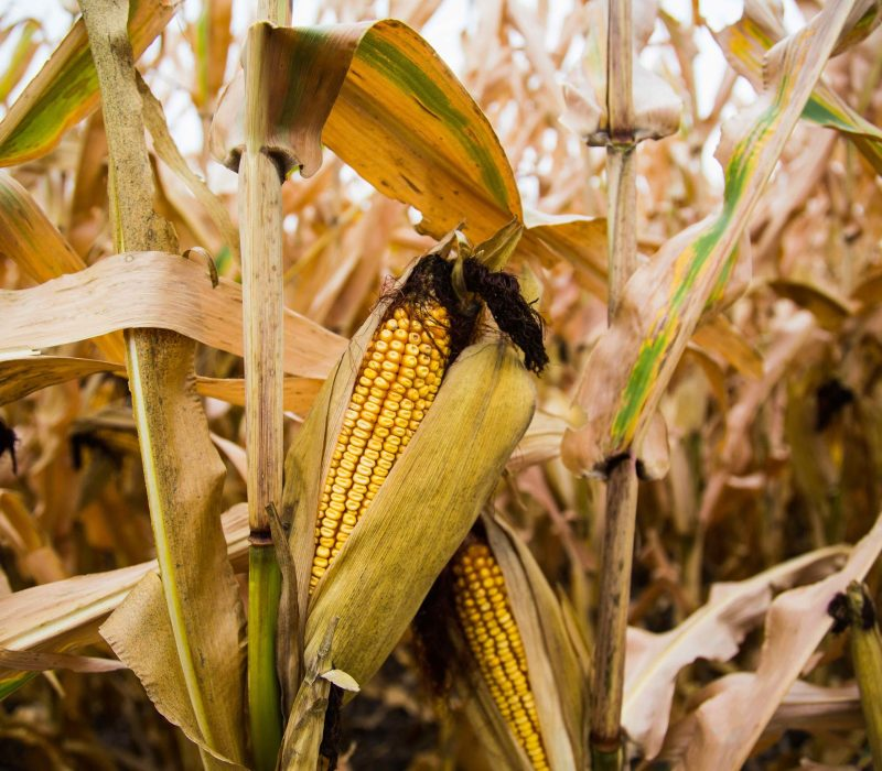 Why Are America's Farmers Killing Themselves in Record Numbers?