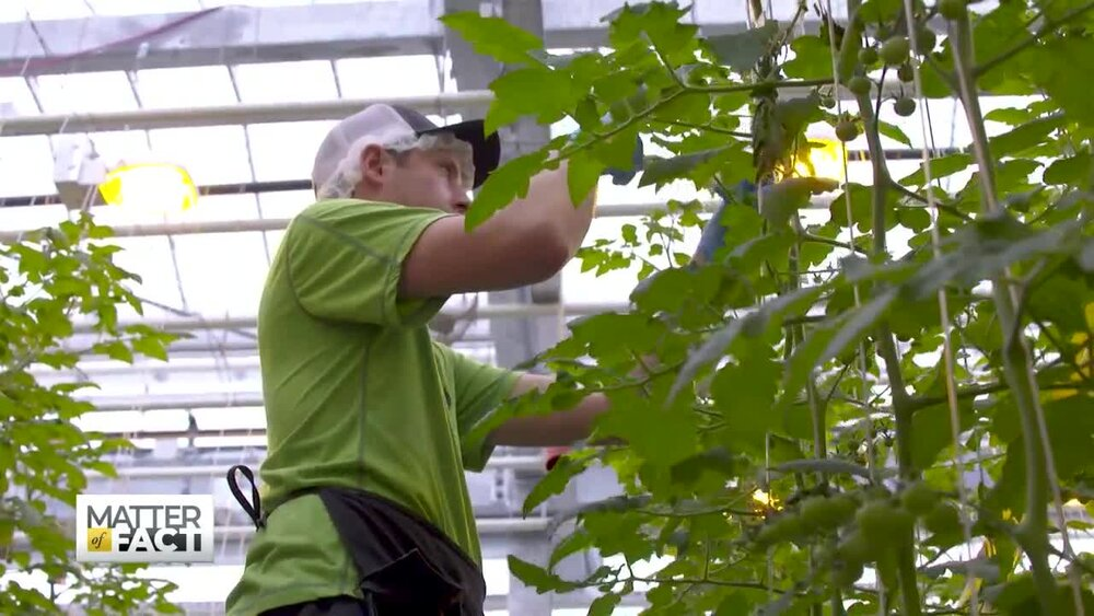 Vertical Harvest: How a Farm Provides Upward Mobility for People With Disabilities