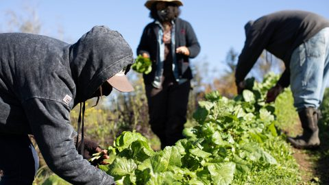 'We wanted to work the land with our kids'- the Black US farmers reclaiming the soil