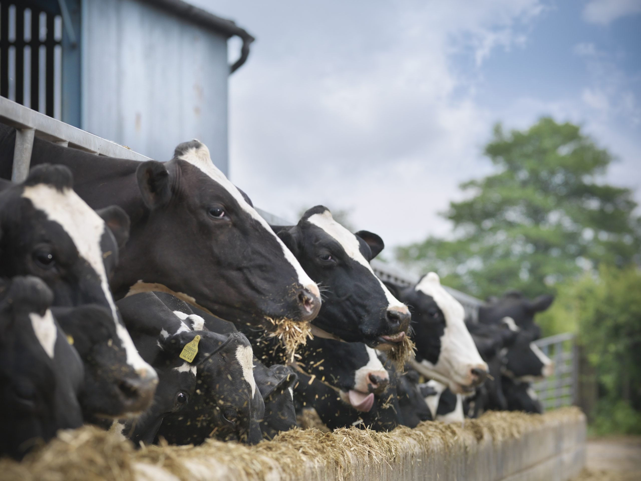 'There are ghosts in the land': how US mega-dairies are killing off small farms