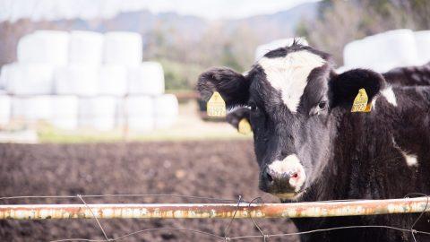 Mega-dairies, disappearing wells, and Arizona's deepening water crisis