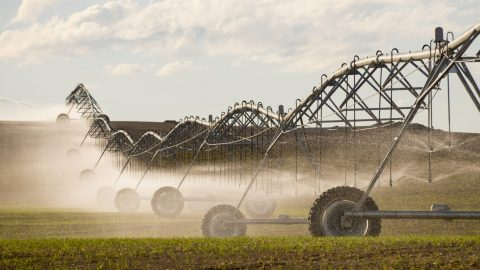 Is It Time to Break Up Big Ag?